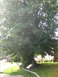 Image for Tolpuddle Martyrs' Tree - Southover Lane, Tolpuddle, Dorset, UK