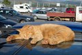 Image for The Tobermory Cat's Parking Lot - Isle of Mull, Scotland, UK