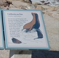 Image for California Sea Lion  -  Pebble Beach, CA