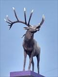 Image for Elk - Vegreville, Alberta