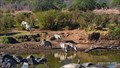Image for Mpala watering hole view  - Kenya