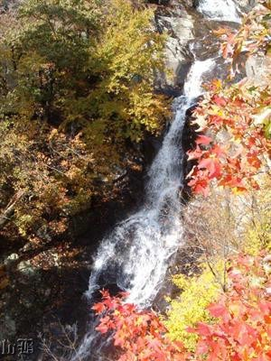 One of the 6 waterfalls in Whiteoak Canyon.