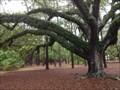Image for Live Oak - Cadillac Square - Dauphin Island, Alabama