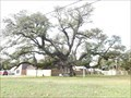 Image for Columbus Live Oak - Columbus, TX