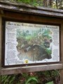 Image for Blick in den Waldboden - Geheimnisvolle Welt im Dunkelen - Bocketal, NRW, Germany