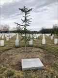 Image for Beirut Barracks Memorial Tree - Arlington National Cemetery