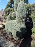 Image for Llama?  -  San Marino, CA