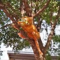 Image for Cat up a Tree - Georgetown, TX