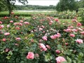 Image for Rose garden at Gråsten Palace, Denmark