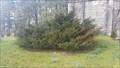 Image for Millennium Yew Tree - St Mary the Virgin - Walkhampton, Devon