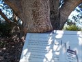 Image for Sign Eating Banksia - Shoalhaven Heads, NSW