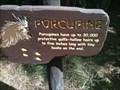 Image for Porcupine - Anaheim, CA