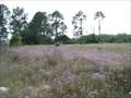 Image for Field of Phlox - Wildwood, FL