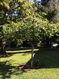 Image for Barbara Lee Williams - San Rafael, CA