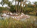 Image for Kilimanjaro Safari Flamingo Island