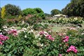 Image for Treloar Roses Display Garden - Bolwarra, Victoria