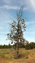 Image for Hwy 97 Shoe Tree - Redmond, OR