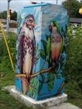 Image for Birds - Austin, TX