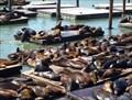 Image for Sea Lions, San Francisco