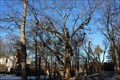 Image for Station Tree - Natick, MA