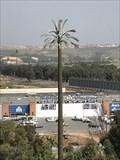 Image for Palmier marocain (Rabat, Rabat-Salé-Kénitra, Maroc)