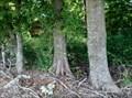 Image for Omnivorous Trees - Pioneer Memorial Cemetery, Wagoner, OK