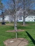 Image for Marina May Boyle Commemorative Tree - Summerside, Prince Edward Island