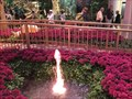 Image for Bellagio Conservatory Fountain - Las Vegas, NV