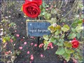 Image for Queen Mary's Gardens - Regent's Park, London, UK