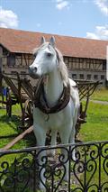 Image for White Horse - Nahwinden/ Thüringen/ Deutschland