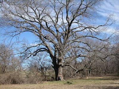 texas state champion pecan exceptional trees on waymarkingcom