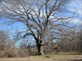Image for Texas State Champion Pecan