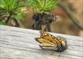 Image for Monarch Grove Sanctuary - Pacific Grove, California
