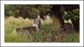 Image for Greyfairs Cemeterie - Perth - Scotland - UK