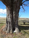 This tree threatens to reclaim the land and nothing will stand in its way.