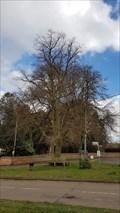 Image for King George V Coronation Tree - Naseby, Northamptonshire