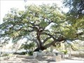 Image for Founders' Oak - New Braunfels, TX