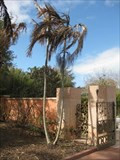 Image for Haicken Tree - Florida Botanical Gardens - Largo, FL