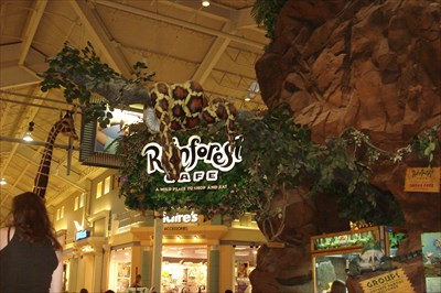 a history and description of rainforest cafe inc Rainforest cafe limited - free company information from companies house including registered office address, filing history, accounts, annual return, officers, charges, business activity.
