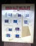 Image for Robson Valley Wildlife - Tête Jaune Cache, British Columbia