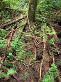 Image for Harrison's Plankboard Trail - Port Renfrew, British Columbia, Canada