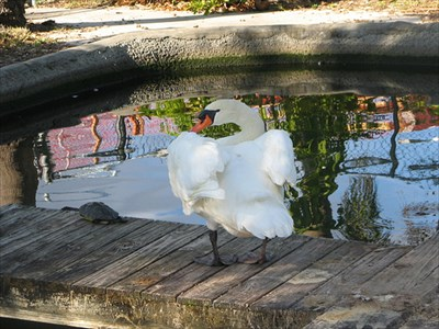 Swans and other water fowl can be fed.
