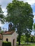 Image for Tree of the republic - Cepí, Czech Republic