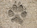 Image for Canine tracks at Arbor Hills Nature Preserve - Plano, TX
