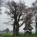 Image for Kroezeboom -Tubbergen, The Netherlands.