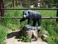 Image for Bear Statue - Rocky Mountains National Park, CO