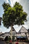 Image for Platane Marktplatz Erpel, Rheinland-Pfalz, Germany
