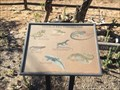 Image for Lizards of Riley Wilderness Park - Coto de Caza, CA