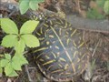 Image for Spring Creek Trail Turtle Crossing - Edmond, OK