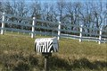 Image for Big Joel's Safari Mail Box - near Wright City, MO